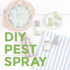 Pest Spray