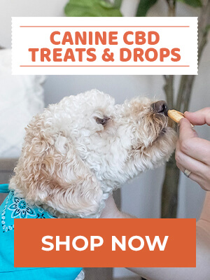 Canine CBD treats & drops - Shop Now